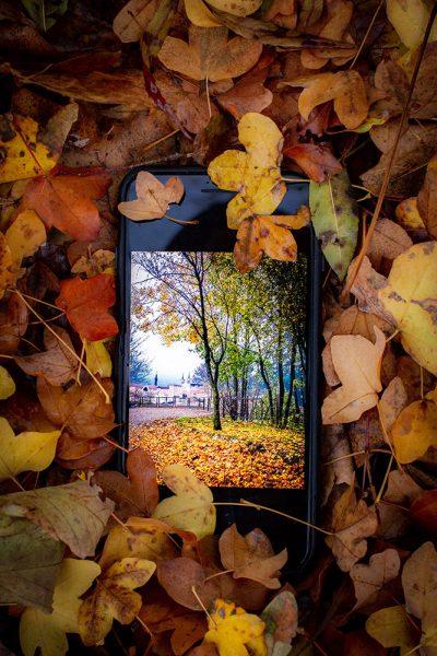 Lyon photographie photographe aparisi iPhone feuille fourvière