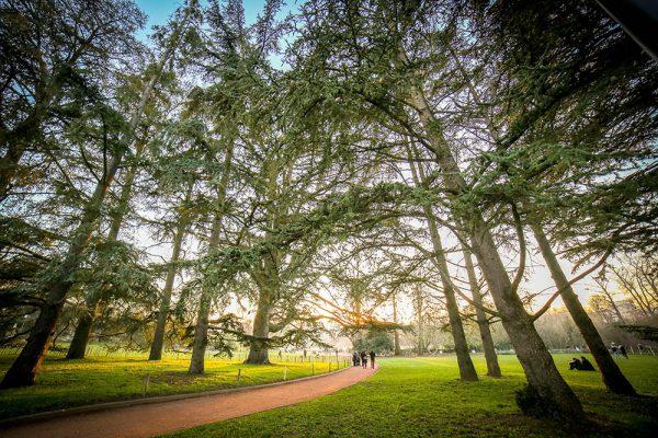 lyon photographie photographe aparisi parc de la tête d'or