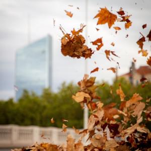 automne Lyon feuilles