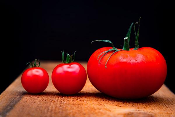 Tomates en ligne